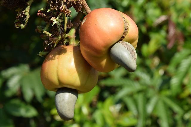 2020-01_Cashew-Frucht.jpg